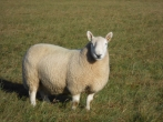 Tupping Time 2014
