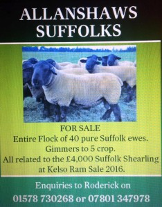Suffolk Advert 2016